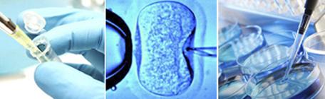 Lo que hay que saber sobre la nueva Ley de Fertilización asistida