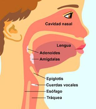 Adenoides-y-Amigdalas