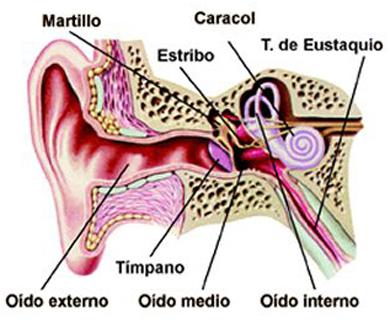 problemas en los oídos en niños