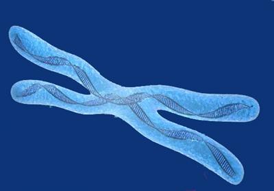 que es el sindrome del cromosoma X frágil
